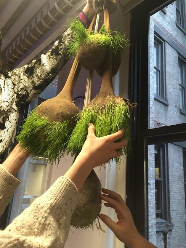 first-grassy-balls